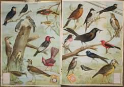 Pair of 1917 Arm & Hammer Useful Birds Broadsides