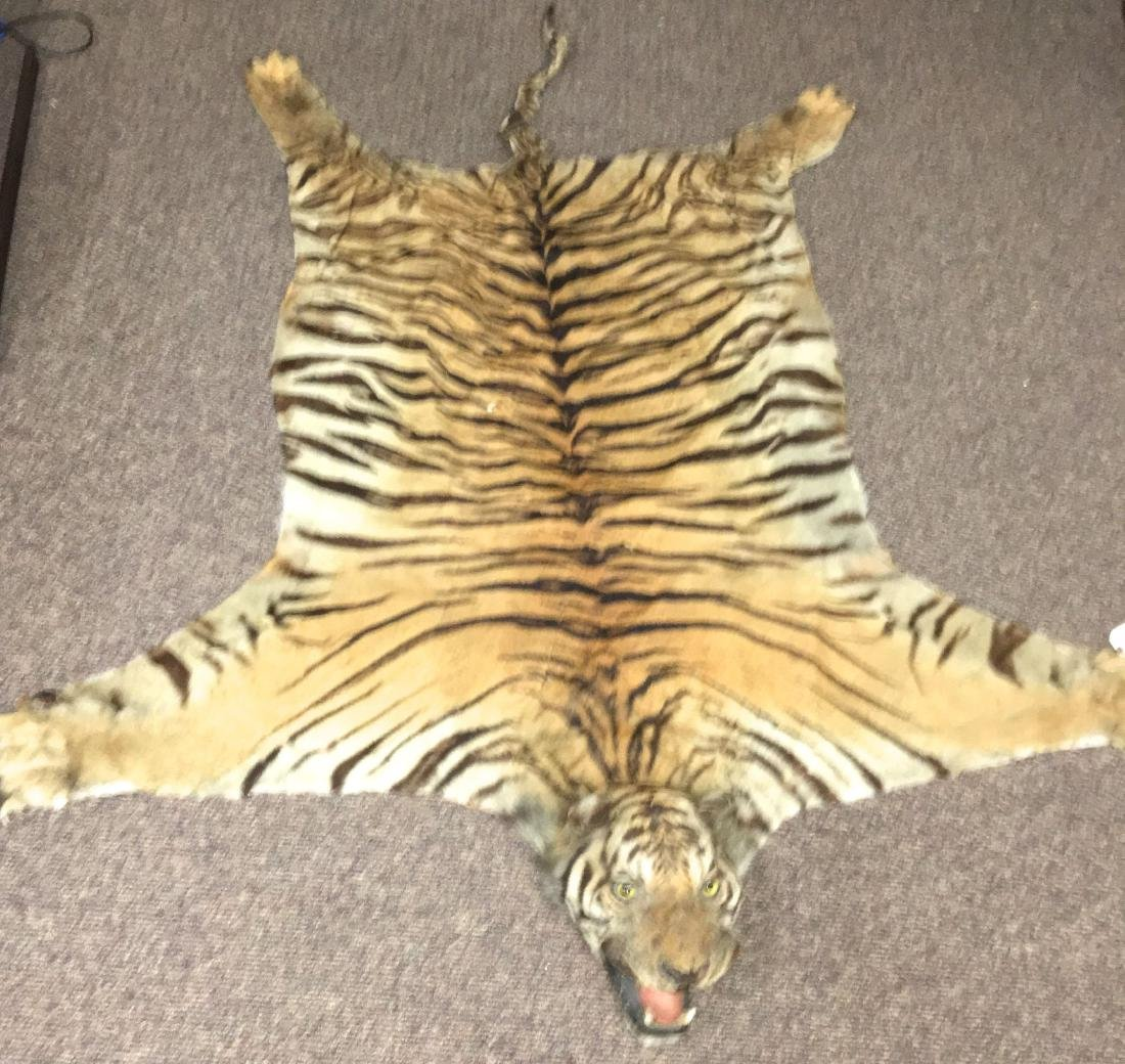 late 19th or early 20th c tiger skin rug
