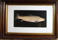 Peter Miller (VT 20th c) Brown Trout