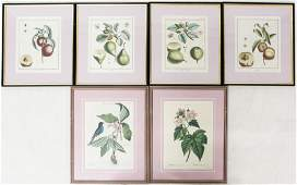 Group of 6 Framed Early 19th c. Botanical Prints