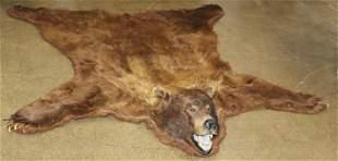 American Brown Bear Taxidermy Rug