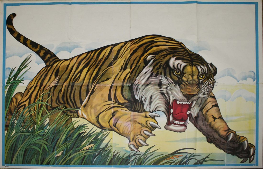 Tiger, shown leaping through tall grass with background