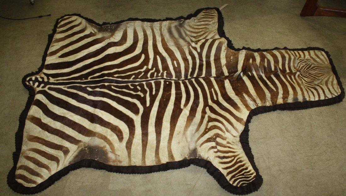 1960's Vintage Zebra skin taxidermy rug, 7' 5†x 5'