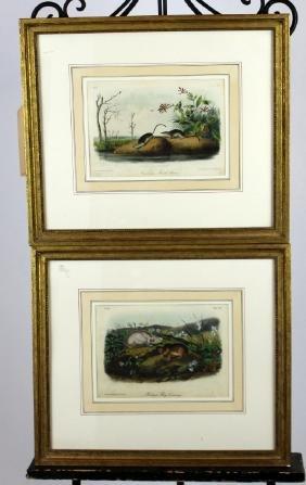 Lot of 2 JW Audubon book plates