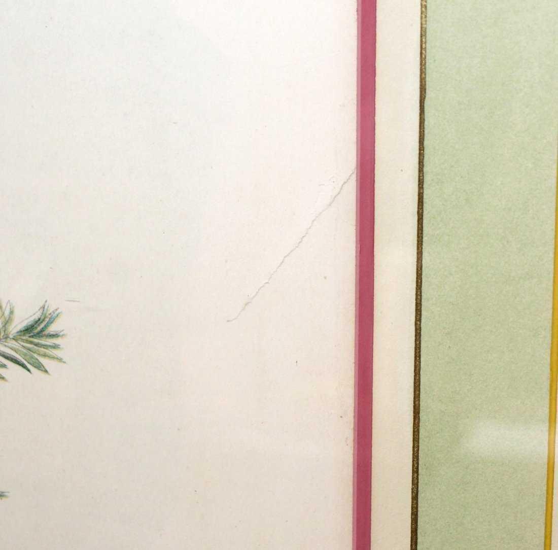 Rose breasted grosbeak Audubon print - 6