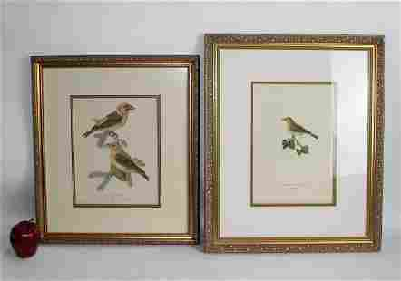 Lot of 2 hand colored ornithological etchings