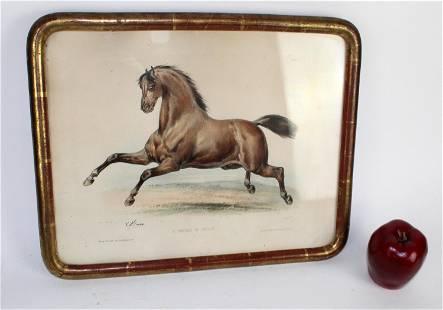 Antique French LeMercier engraving of horse