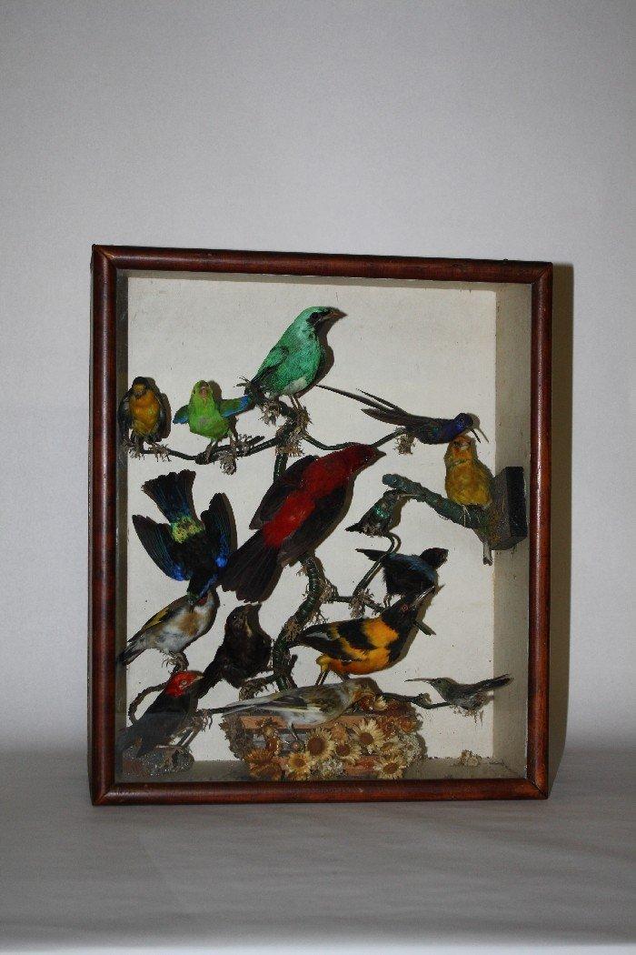 4: Victorian bird specimens in shadowbox