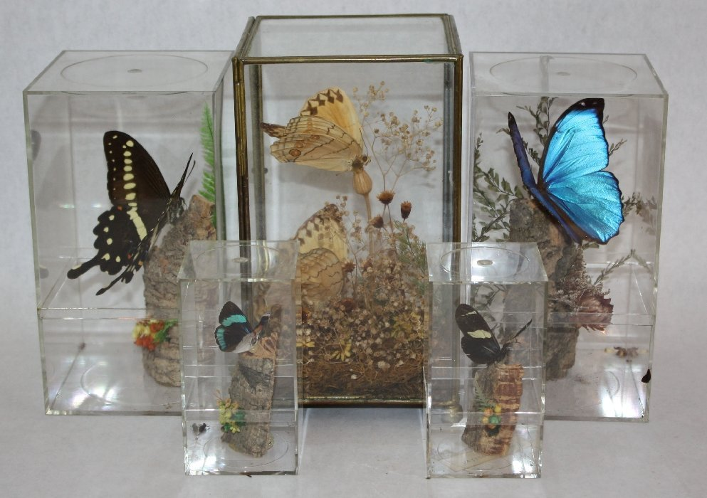Lot of 6 butterfly & moth specimens in display boxes