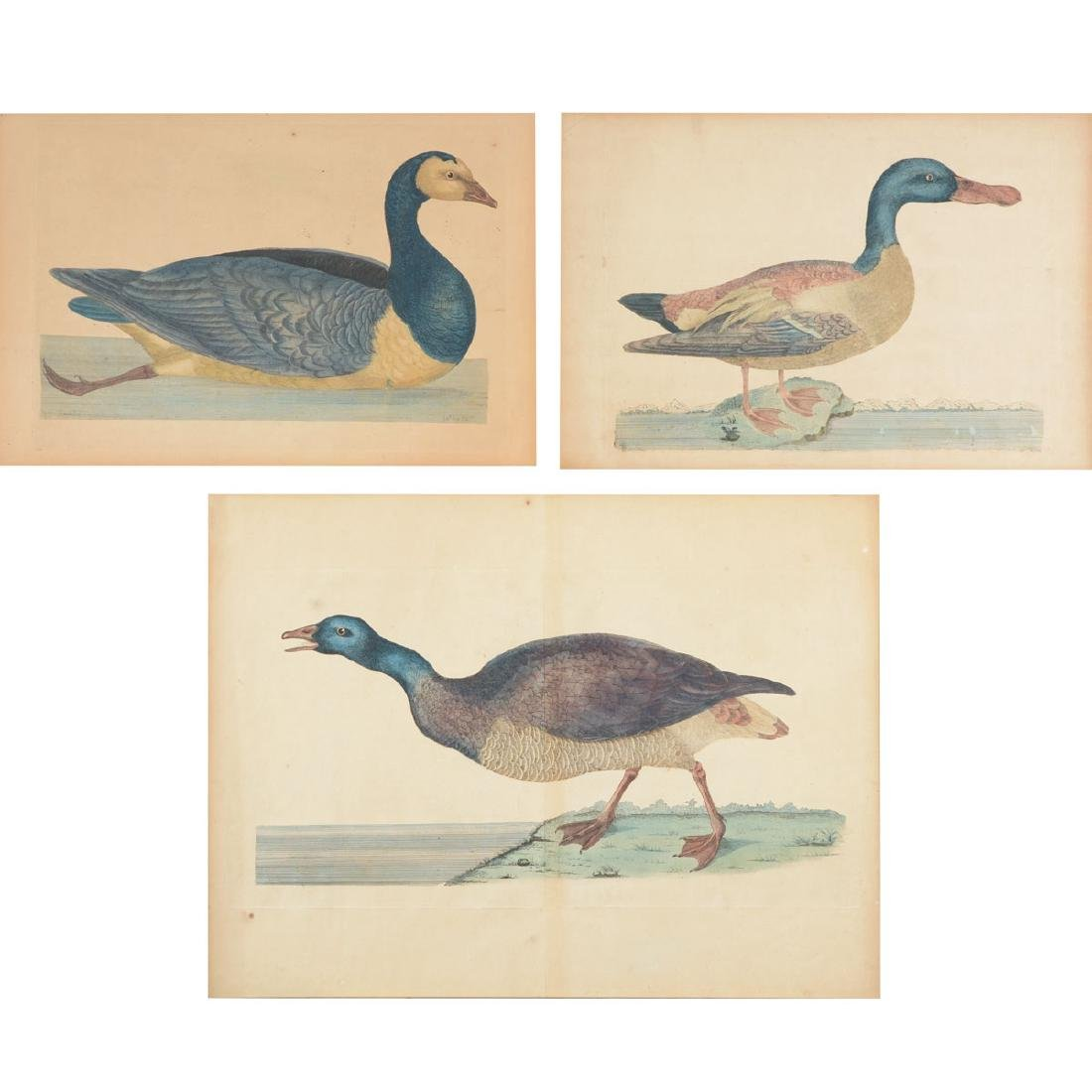 "William Hayes Three ""Duck"" hand colored etchings"
