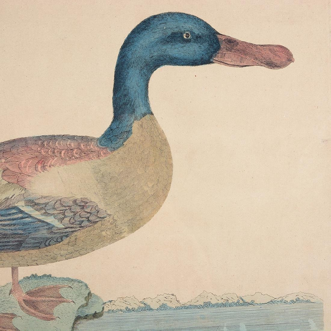 "William Hayes Three ""Duck"" hand colored etchings - 2"