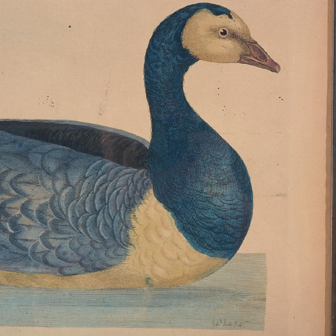 "William Hayes Three ""Duck"" hand colored etchings - 3"