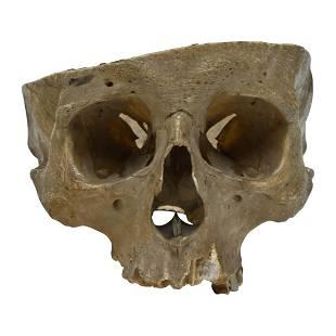 Ethnographic Half Human Skull, Incised Drawings