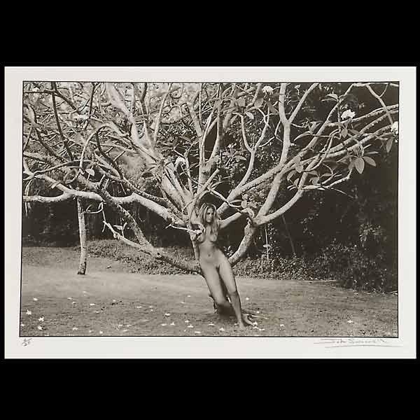 "14: John Swannell ""Philippa tree, Barbados"""