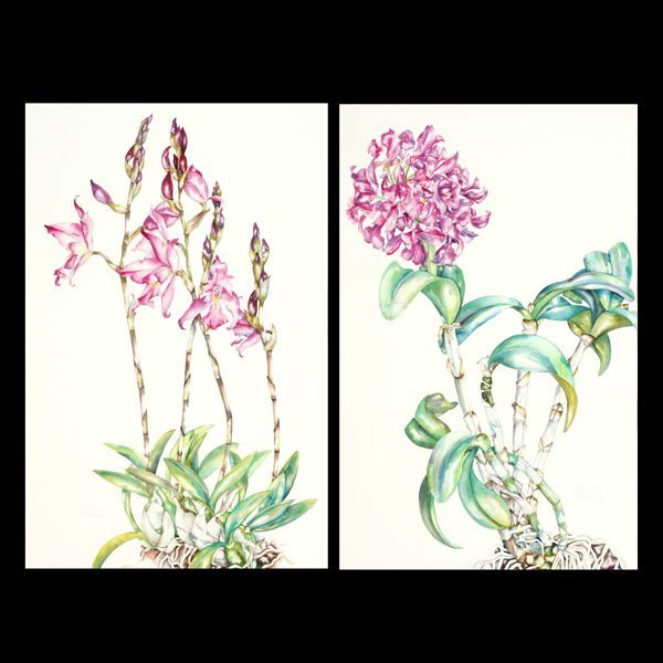 """1112: Sally Robertson 2 works """"Orchids"""" Watercolor"""