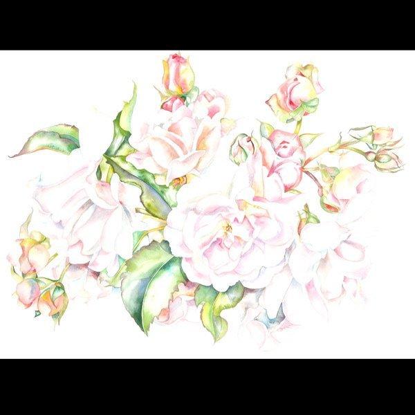 "1114: Sally Robertson ""Hybrid Musk Rose"" Watercolor"
