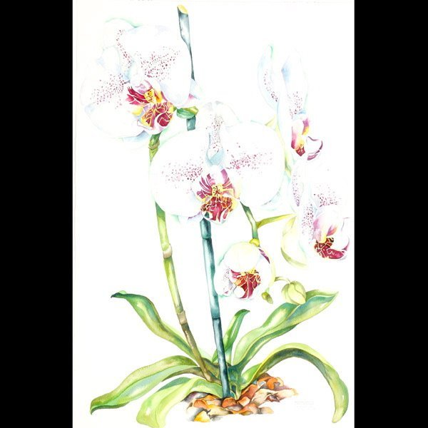 """1117: Sally Robertson """"Orchid"""" Watercolor"""