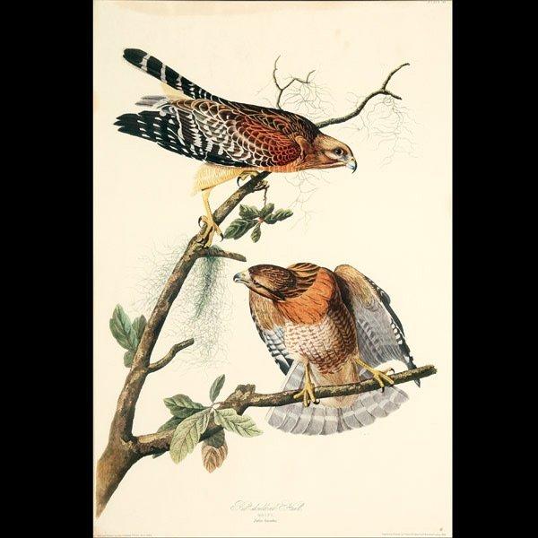 """1122: Audubon """"Red Shouldered Hawk"""" Litho"""