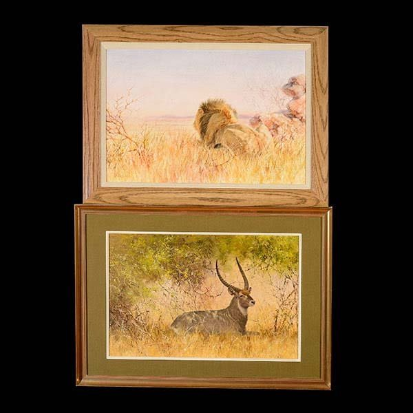 Lion and Gazelle African Safari, by Paul Rose
