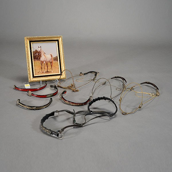 Three Brass Arabian Horse Show Halters, Leather Bridle,