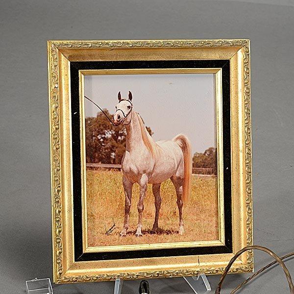 Three Brass Arabian Horse Show Halters, Leather Bridle, - 2