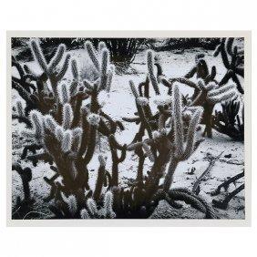 "Brett Weston ""cacti 1967"" (baja Series) Silver Gelatin"