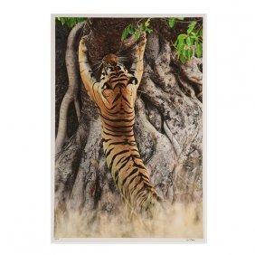 "Gero Heine ""male Tiger Scratch Marking Tree"""