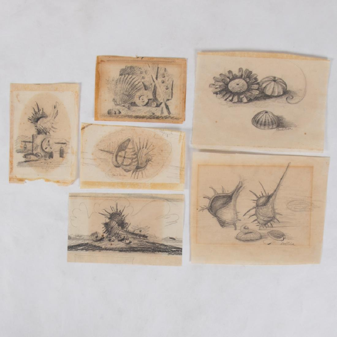 Paul Riba (1912-1977) A Group of Six Seashell Studies,