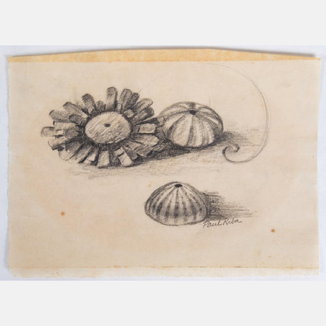 Paul Riba (1912-1977) A Group of Six Seashell Studies, - 2