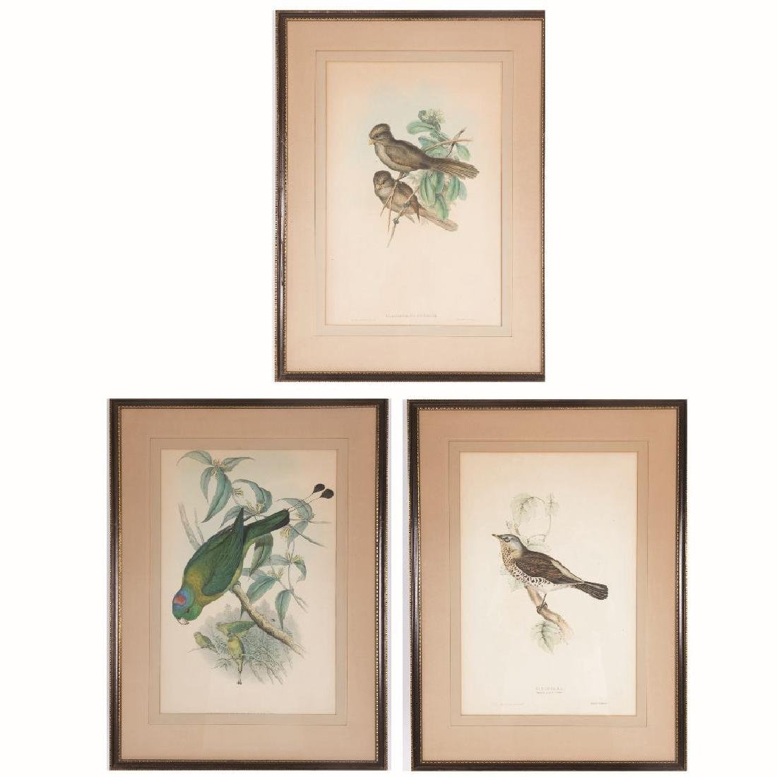 John Gould (1804-1881) Three Works Depicting Birds,