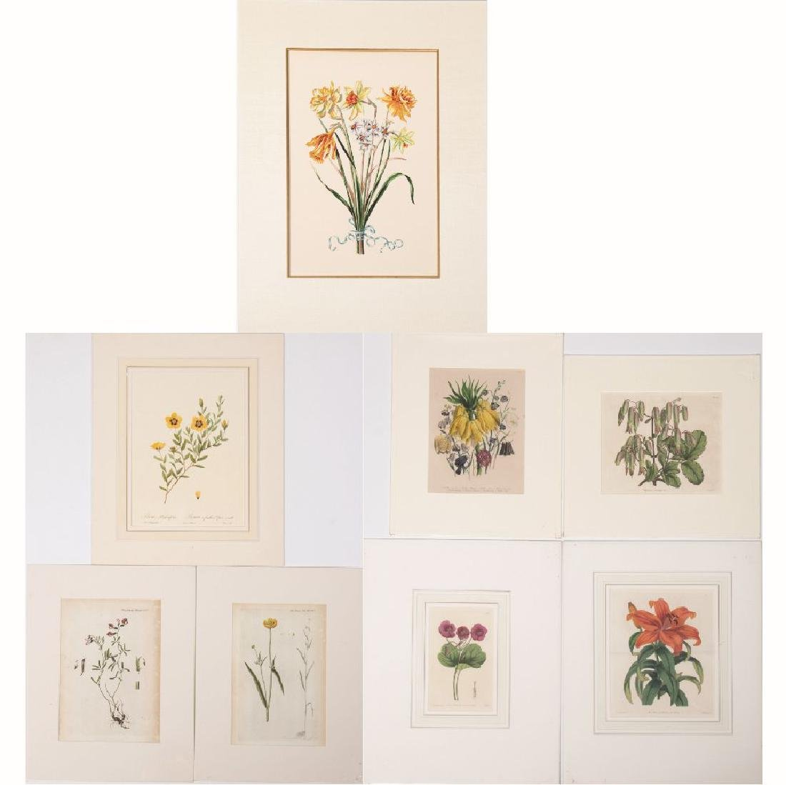 A Group of Eight Botanical Colored Engravings and