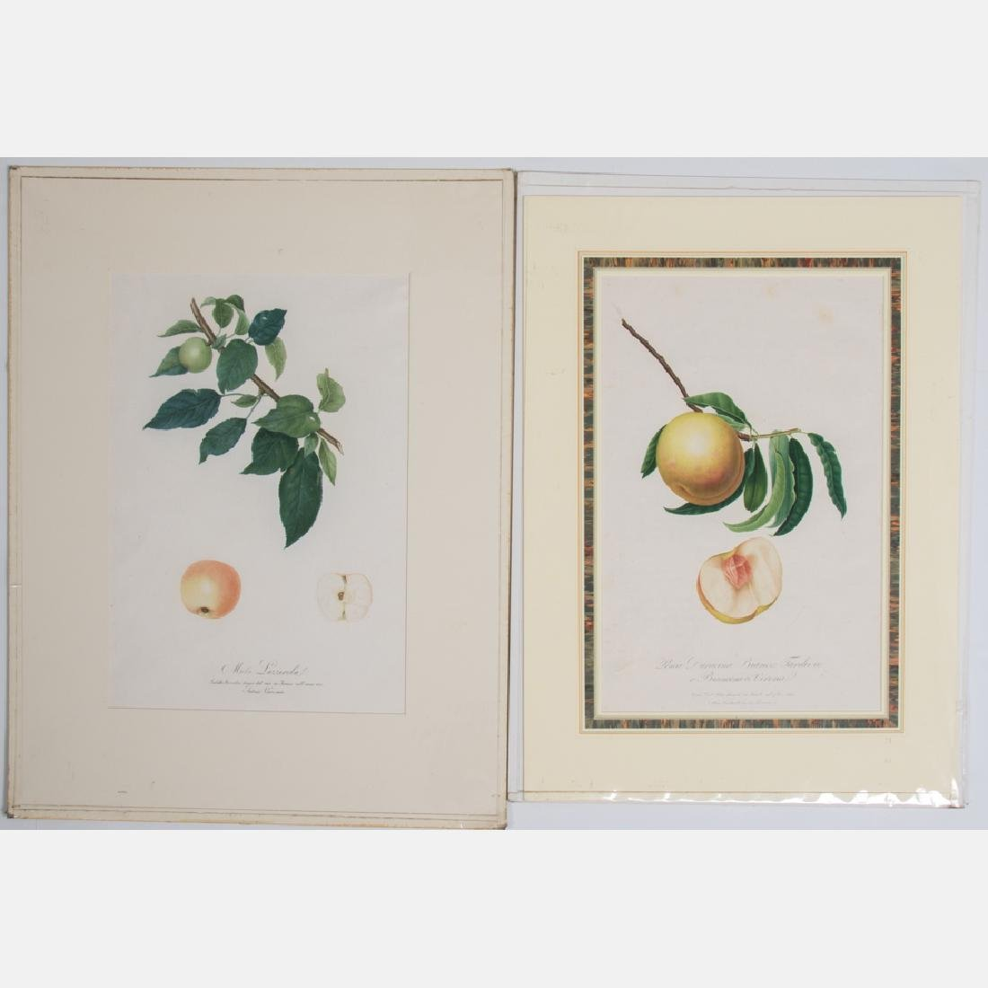 Two Italian Colored Engravings Depicting Fruit, 19th