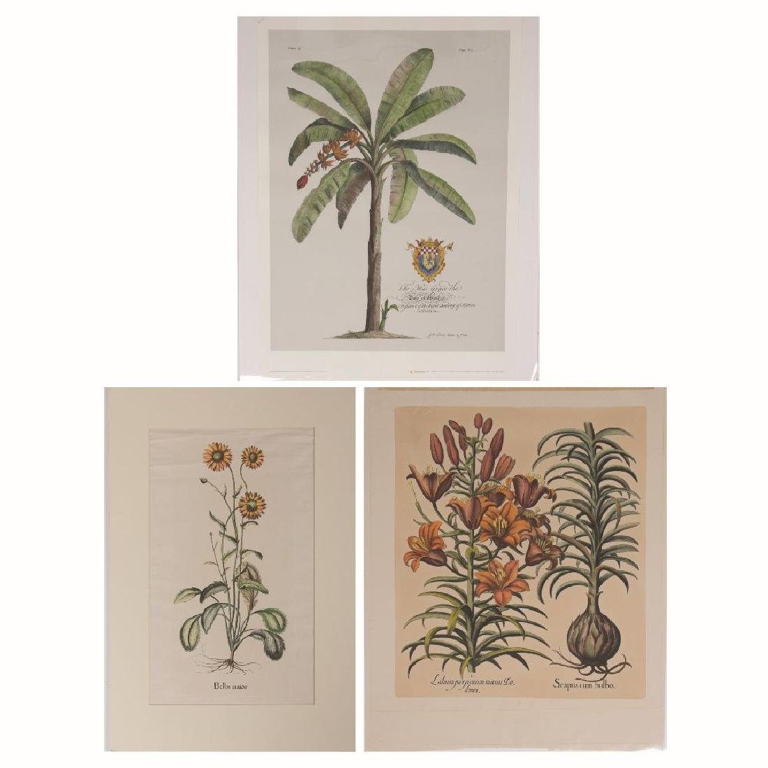 A Group of Three Botanical Restrike Engravings by