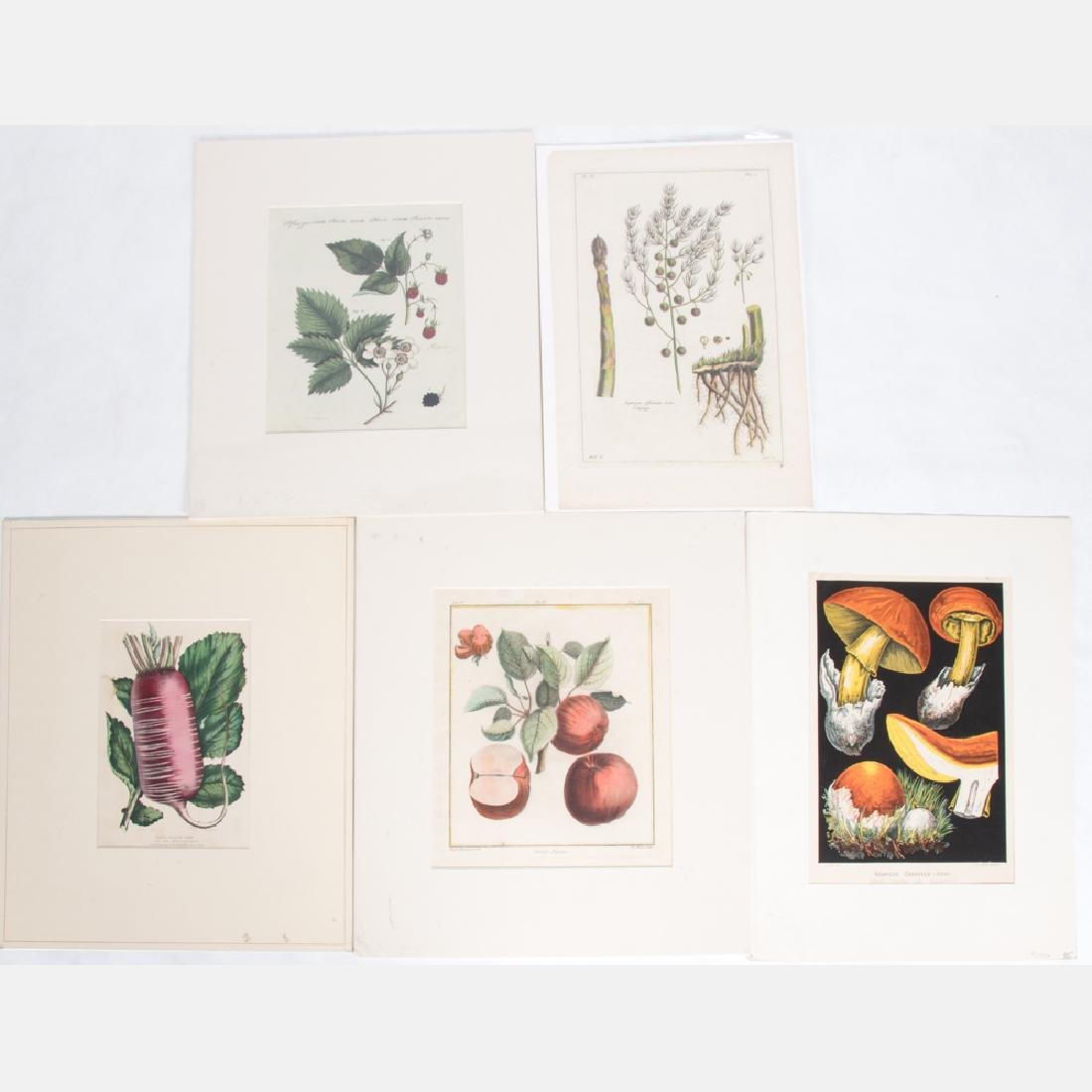A Group of Five Colored Engravings Depicting Fruits by