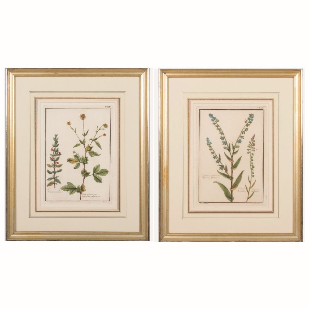 A Pair of Italian Botanical Hand Colored Engravings
