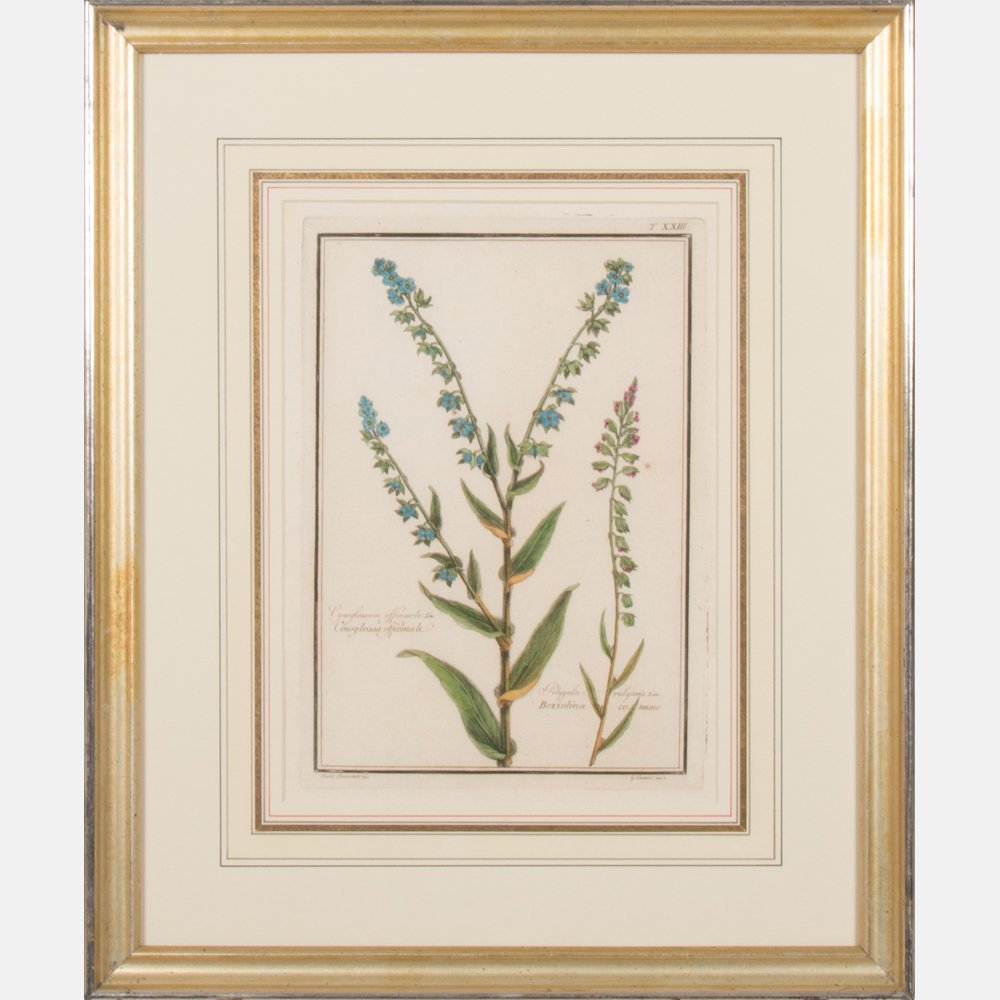 A Pair of Italian Botanical Hand Colored Engravings - 2