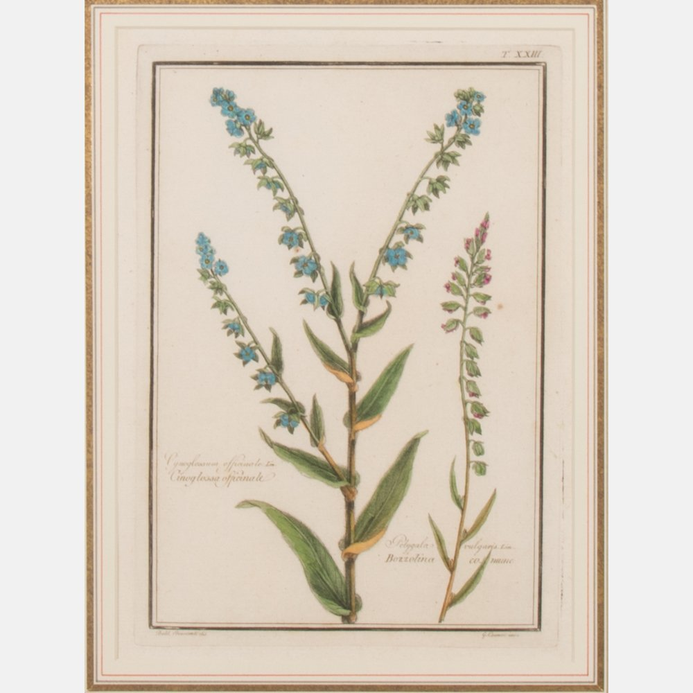 A Pair of Italian Botanical Hand Colored Engravings - 3