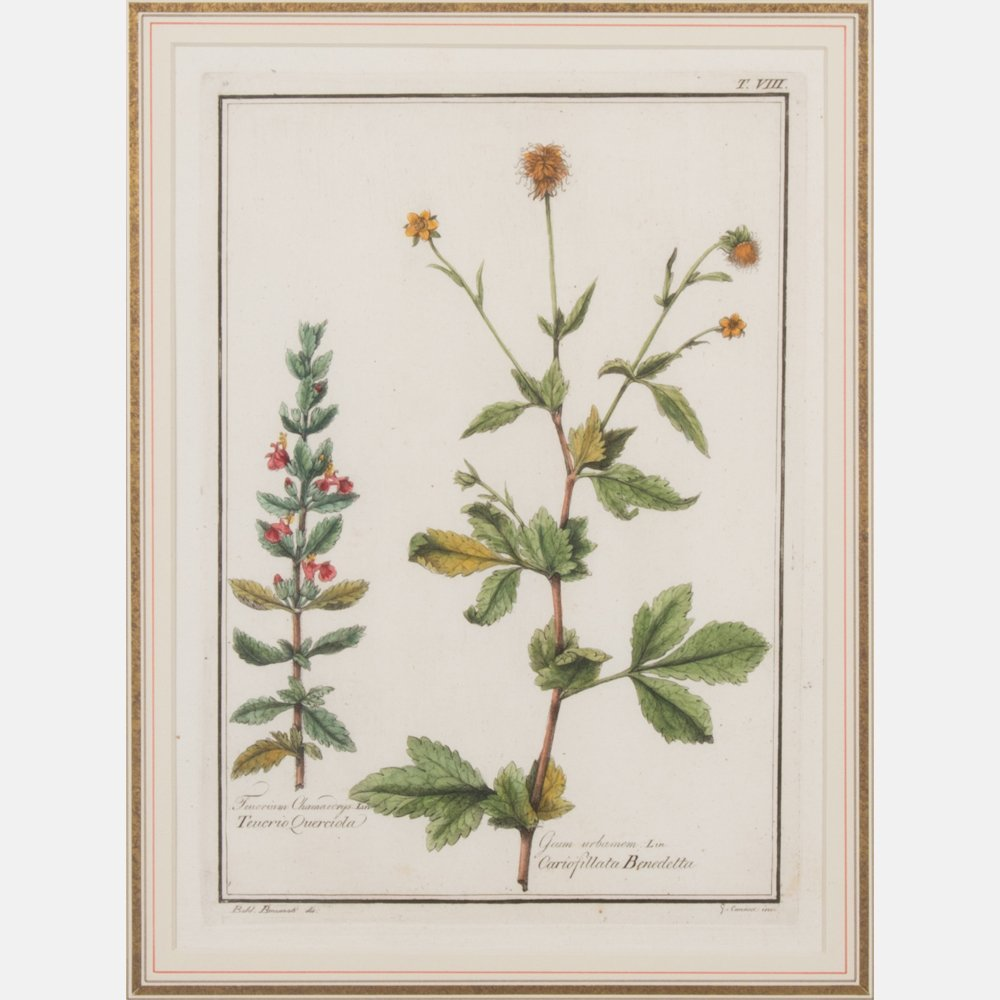 A Pair of Italian Botanical Hand Colored Engravings - 5