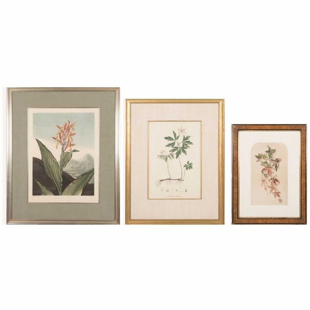A Group of Three Botanical Colored Lithographs