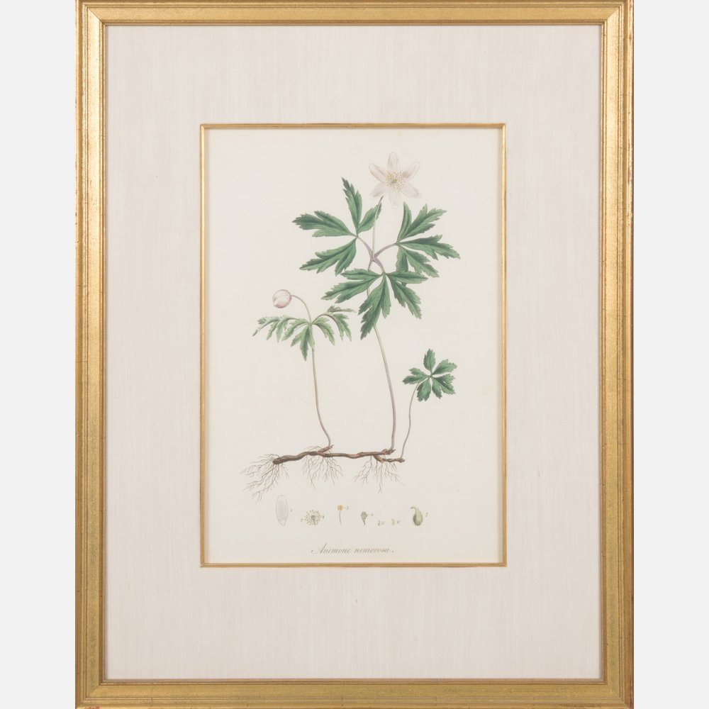 A Group of Three Botanical Colored Lithographs - 4
