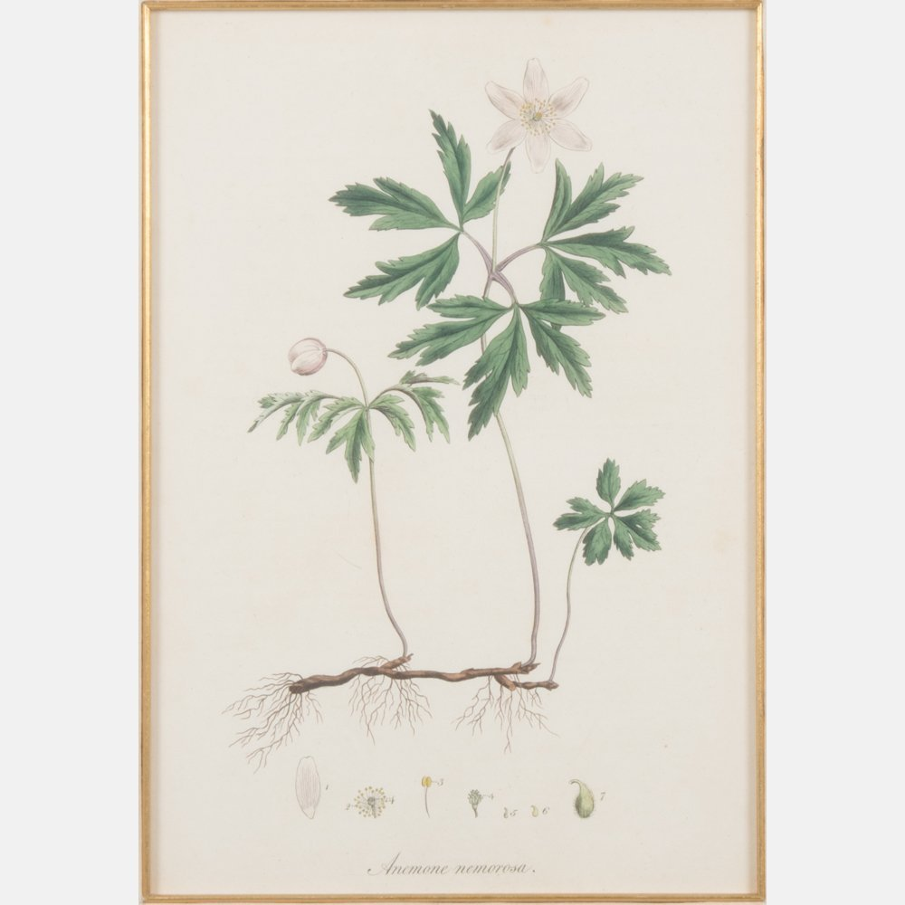 A Group of Three Botanical Colored Lithographs - 5