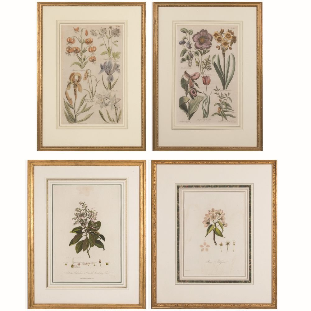 A Group of Four Framed Botanical Prints