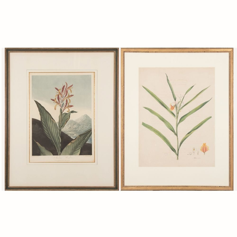 Two Botanical Hand Colored Lithographs