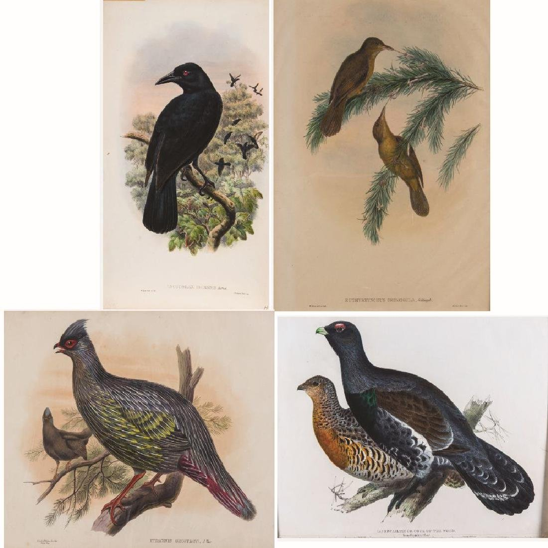 A Group of Four Colored Lithographs Depicting Birds by