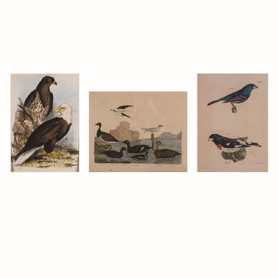 A Group of Three Colored Lithographs Depicting Birds by