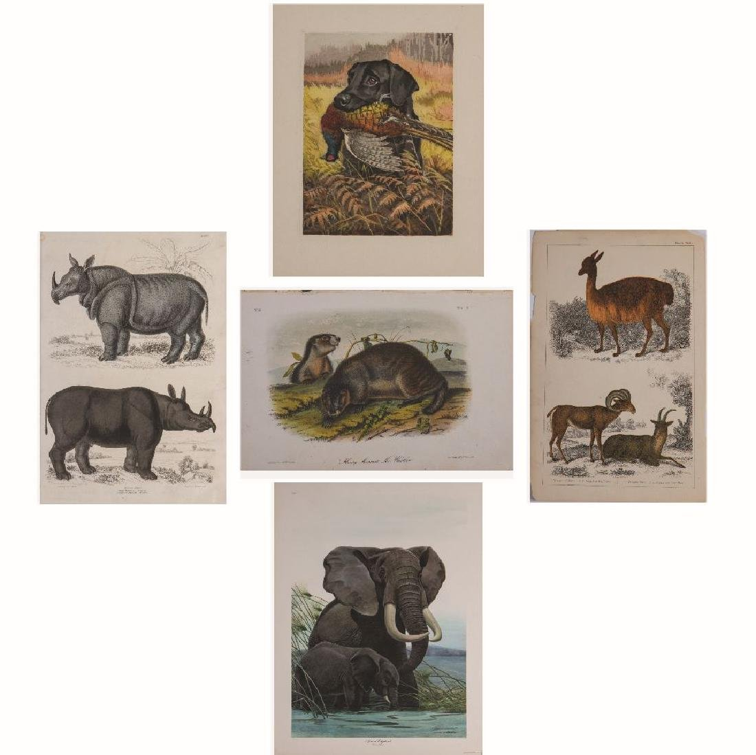 A Group of Lithographs Depicting Animals by Various