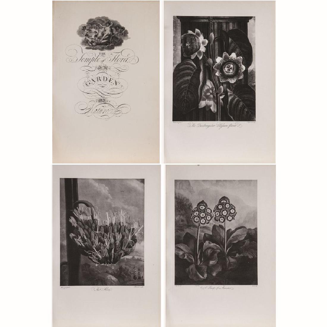 A Partial Copy of Robert John Thornton's 'Temple of