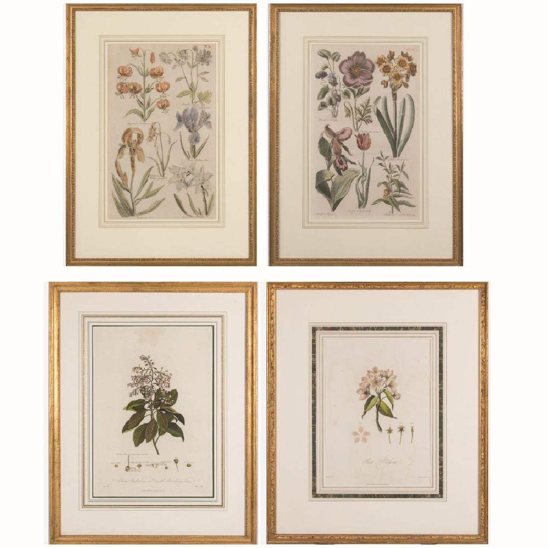 A Group of Four Framed Botanical Prints by Various