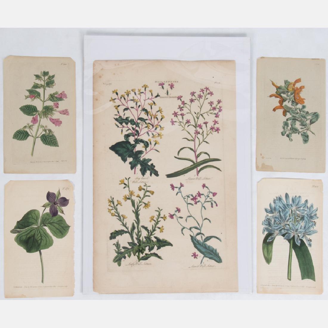 Sir John Hill (c. 1716-1775) Four Botanicals from