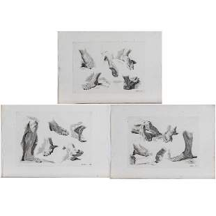 Marco Pitteri 17021786 Three Studies of Feet